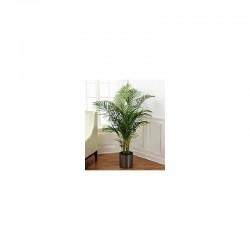 Palmier - plante